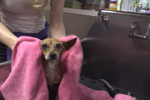 When They Found Her, The Fact That She Only Had 3 Legs Was The Least Of Her Issues 10