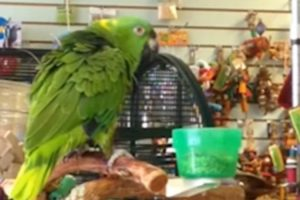 "Parrot Sings ""Everybody Dance Now"" And Says He Isn't Crazy! 10"