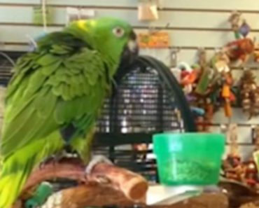 "Parrot Sings ""Everybody Dance Now"" And Says He Isn't Crazy! 4"