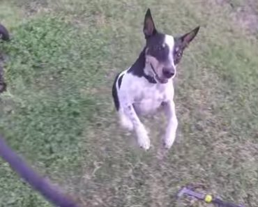 Meet Django, The Little Dog With A Deathwish 3