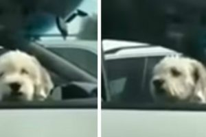Woman Has Her Day Made After Getting The Ultimate Dog Surprise While Waiting In Her Car 12