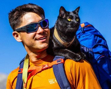 The Backpacking Cat Who Travels The US With His Human 1