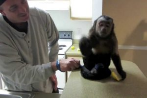 Monkey Tries A Lemon For The First Time… And Totally Hates It 12