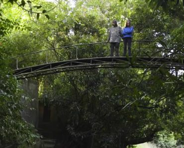 This Couple Nursed a Rainforest Back to Life 2