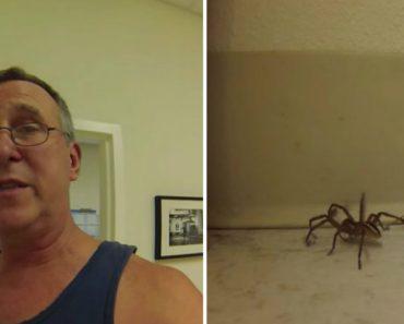 Guy Helps Huge Wolf Spider Get Untangled 3