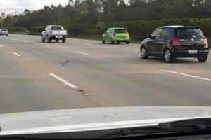 Speed Demon Pigeon Is Hell-Bent On Racing Cars Down The Highway 10