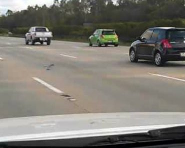 Speed Demon Pigeon Is Hell-Bent On Racing Cars Down The Highway 3