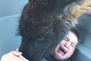 Feeding A Llama Isn't As Joyful As It May Sound And These Cute Boys Are Living Proof 12