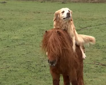 Dogs And Ponies Are Not Only Human's Friends, But Also Each Other's 6