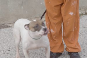 Watch The Touching Moment When Prisoners Meet The Dogs They'll Train 11