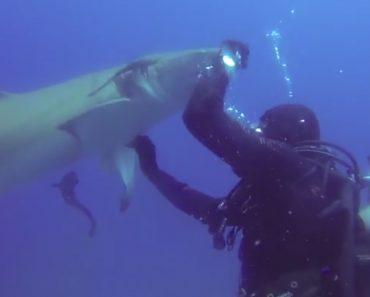 Injured Shark Ask Divers For Help 4