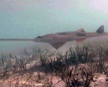 Scientists Just Captured The First-Ever Sawfish Birth On Film And It's Incredible 2