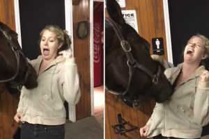 Hilarious Horse Can't Stop Playing With Coat Zipper 10