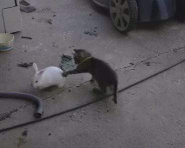Cat Gets Destroyed While Playing Tag With A Bunny 7
