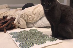 Cat Gets Dizzy Watching Optical Illusion 10