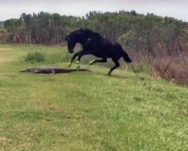 Alligator Gets Attacked By Horse In Florida 5