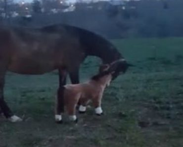 """Did It Slip Out?!"" Hilarity Ensues When Woman Gives Pregnant Mare A Fake Foal 4"