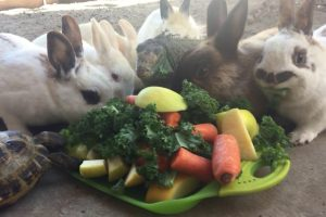 Unlikely Group Of Animals Including Rabbits, Chicken, Tortoise And Even Iguana Feast On A Vegetable Buffet 11