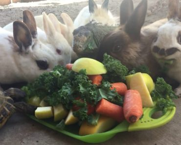 Unlikely Group Of Animals Including Rabbits, Chicken, Tortoise And Even Iguana Feast On A Vegetable Buffet 3