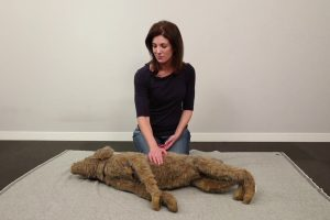 Learn To Do CPR On Your Cat Or Dog 11