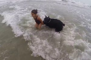 Dog Protects Little Girl In The Ocean 11