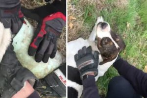 Firefighters Rescue Dog With Sewer Pipe Stuck on Its Head 10