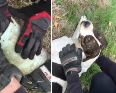 Firefighters Rescue Dog With Sewer Pipe Stuck on Its Head 8