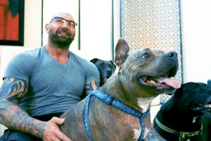 Dave Bautista Hanging With And Talking About His Pitbulls Will Give You Feels 12