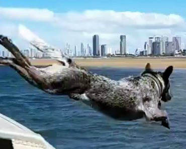 Fastest Dog In Australia Races The Boat 8