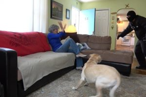 Dogs Tested to See Whether They'd Defend Owner During Home Invasion 11