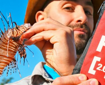 How to Cure a Lionfish Sting! 4
