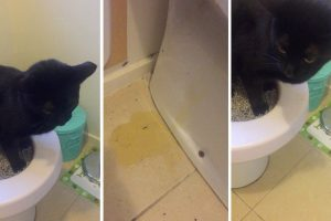 Cat Fails At Peeing In The Toilet 10