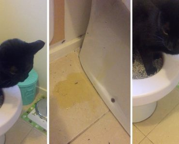 Cat Fails At Peeing In The Toilet 7