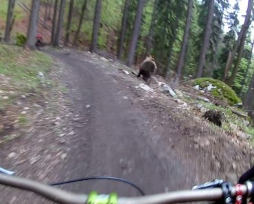 This Bear Was Not Pleased With Bikers Riding Through Its Neck Of The Woods 9