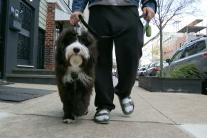 The Challenges of Walking an Adorable Dog Down a Busy New York City Sidewalk 11