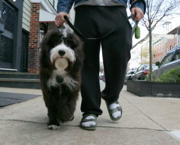 The Challenges of Walking an Adorable Dog Down a Busy New York City Sidewalk 9