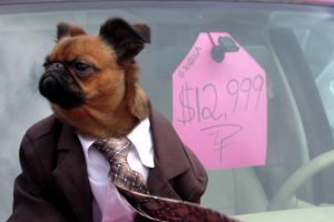 A Dapper Little Dog In a Suit Makes a Convincing Used Car Salesman in a Parody Commercial 11