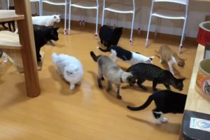 A Clowder Of Curious Cats Have The Same Startled Reaction To A Robot Vacuum All At The Same Time 10