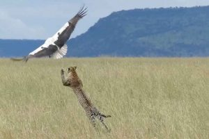 Bird Makes Miraculous Escape From Hungry Leopard 12