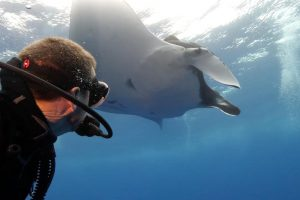 Diver Swims With Mesmerising Manta Rays 10