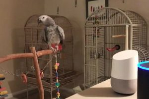 Clever Parrot Learns to Activate Alexa 10