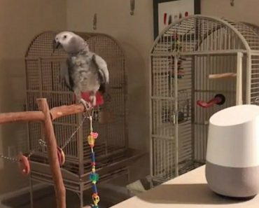 Clever Parrot Learns to Activate Alexa 7