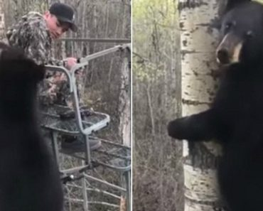 Hunter Experiences Close Encounter With Bear In Tree Stand 9