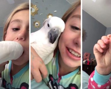 Cockatoo Pulls Out Little Girls Tooth 5