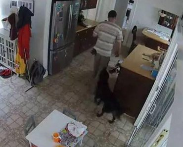 Friendly Dog Wags Its Tail as Burglar Prowls Around Home 7