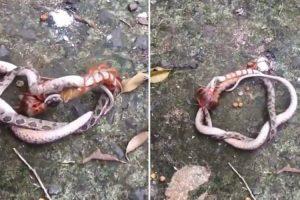 Snake Found Battling Giant Centipede In Vietnam 10