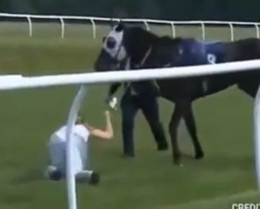 At The Races Presenter Stuns Onlookers By Stopping Horse Running Loose At Chepstow 1