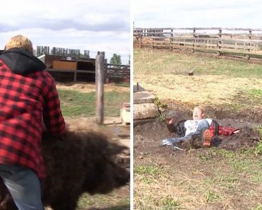 Man Thrown Into Muddy Hole After Riding Pig 3