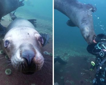 Cheeky Sea Lions Hang Out With Divers 9