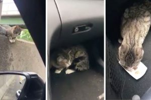 Driver Rescues Terrified Cat Stranded On Highway 10